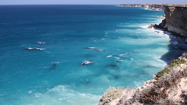 Great Australian Bight whales