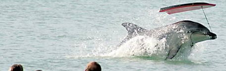 2010 Whale & Dolphin News - Whales on the Net