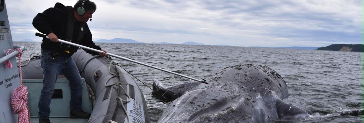 Anti Tangle Sea Ledger Boom 50mm 3 per packet Sea  Boat Beach  Fishing