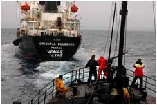 pursuing Jap whaler